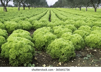 Growth of vegetable seedlings outdoors in winter in southern Italy.