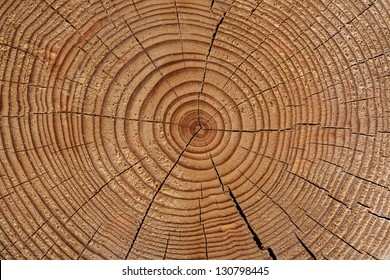 growth-ring