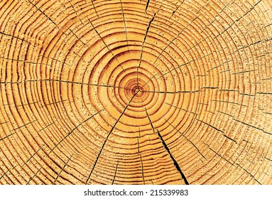 growth-rings
