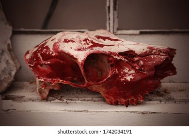 gruesome death animal skull stained with blood