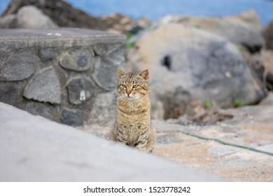 Grumpy brown stripped wild cat against blurry harbor background.