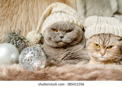 Grumpy christmas cats with holiday decorations