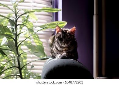 Grumpy And Cute Cat Enjoy At Home Angry Cat Predator