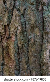 Grunge bark brown pine tree