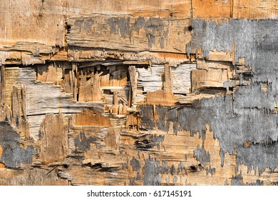 grunge Broken plywood for abstract background