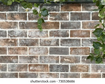 grunge brown bricks wall with some green leaves as the frame for texture background