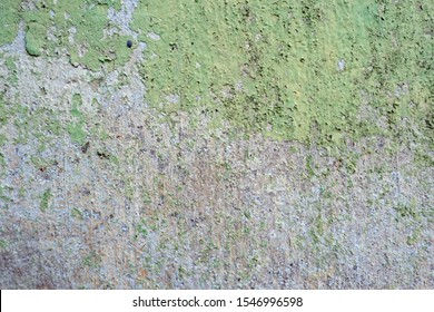 Grunge Cement Wall Texture. Moss background, Green moss on grunge texture.Walled walls are mossy and rusty.old wall texture with moss and water streaks close-up.Vintage texture of old building.