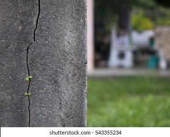 Grunge Cracked Wall and Sapling