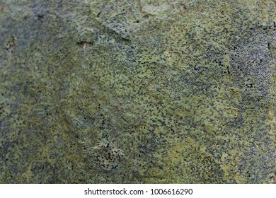 Grunge Effect Background Texture of Lichen and some Moss on a Rock.