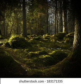 Grunge forest background in sweden. Texture conceptual image