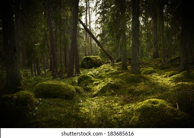 Grunge forest background in Sweden. Textured conceptual image