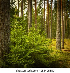 Grunge forest in Sweden. Textured conceptual image