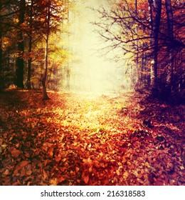 Grunge image of dark forest. Halloween background.