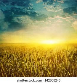 Grunge image of wheat field at sunset.