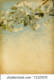grunge   paper background with cherry blossom
