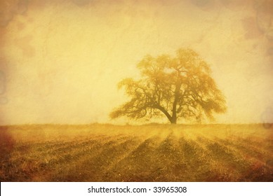 Grunge sepia oak tree in Winter fog, intentionally aged antique look, cultivated farm land in foreground with fog in furrows