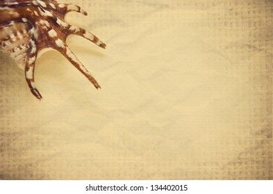 Grunge texture with seashell