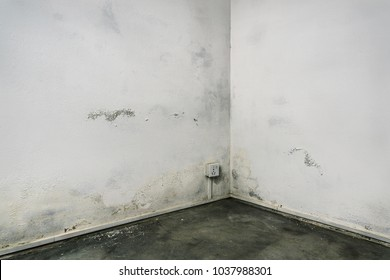 Grungy room corner with concrete floor and white walls damaged by damp