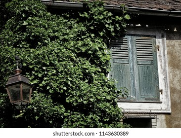 Grungy window with closed shutters and ivy growing on wall