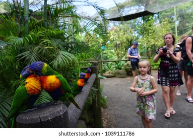 GUADELOUPE, CARIBBEAN, FRANCE - FEBRUARY 9, 2018:Two parrots play to each other in Botanical Garden, Guadeloupe, Deshaies.