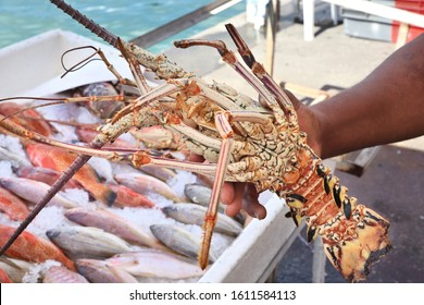 Guadeloupe fish market in Pointe a Pitre, biggest city of Guadeloupe. Langouste (aka spiny lobster).