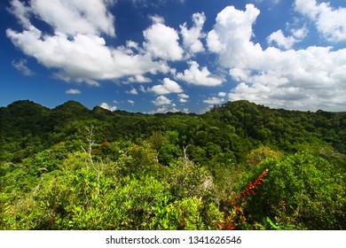 Guajataca Forest Reserve in Puerto Rico