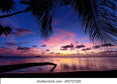 Guam's Nimitz Beach Park at sunset with palm fronds hanging overhead and a palm tree that has fallen into the water due to beach erosion.