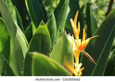 Guanacaste Costa beautiful plant in forest