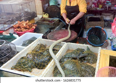 GUANGZHOU, CHINA - CIRCA MARCH 2016: Chinese typical fish and living snakes and reptiles market