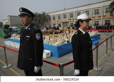 GUANGZHOU, CHINA - JAN. 6. 2014: Chinese Police and Customs officers destroy confiscated ivory.