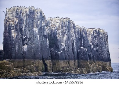 Guano covering sea cliffs from breeding colonies of sea birds off the Northumberland coast