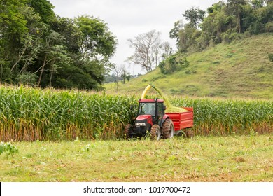 GUARANI, BRAZIL - February 4, 2018 - Transgenic maize crop for livestock feed in Brazilian rural property