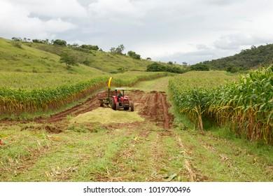 GUARANI, BRAZIL - February 4, 2018 - Transgenic maize crop for livestock feed in Brazilian rural property