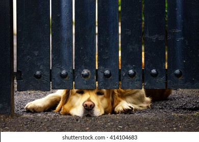 guard dog bored under a gate