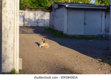 A guard dog in the parking lot. Homeless dog