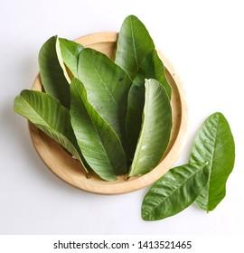 Guava Leaves in wooden bowl - daun jambu di dalam mangkok kayu