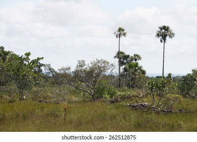 GUAVIARE, COLOMBIA - NOVEMBER 10, 2012: The landscape in the Department of Guaviare. Eastern regions of Colombia.