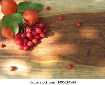 Guelder-rose, physalis and mountain ash (autumn motives)