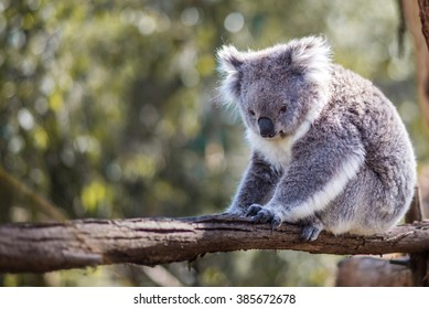 I guess you can say that I'm KOALA-fied to get your attention