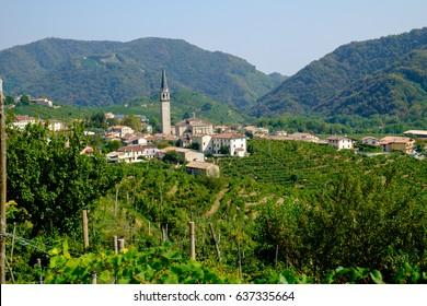 Guia in the prosecco vinyards near Valdobbiadene