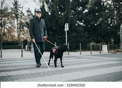 Guide dog helping blind man to cross the street.