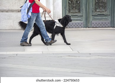 Guide dog is helping a blind man on the streets of the city