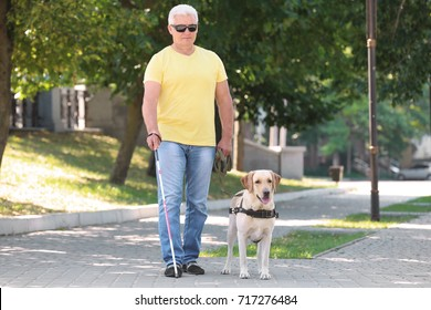 Guide dog helping blind man in the city