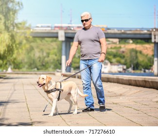 Guide dog helping blind man on embankment