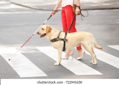 Guide dog helping blind woman on pedestrian crossing