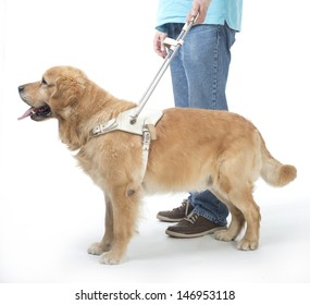 Guide dog and man isolated on white
