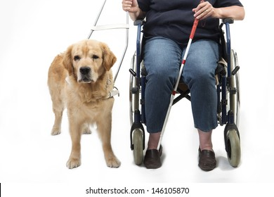 Guide dog and wheelchair isolated on white
