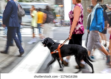guide-dog helping blind man in the city in motion blur