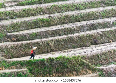 Guilin, China worker on a rice terrace.