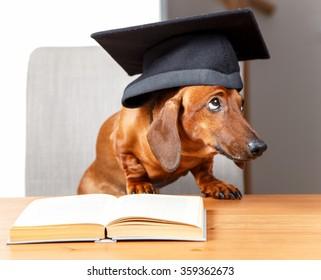 Guilty looking scholar